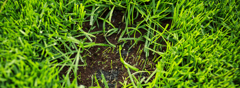 Real Grass with small patch