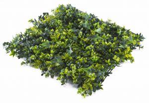 Newton Fern Hedge Sample