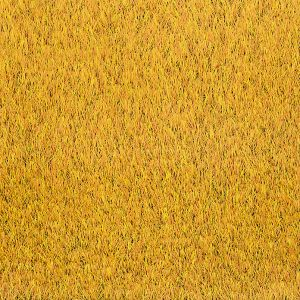 Urban Colours - Sand Gold